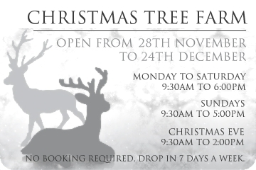 Chester Christmas Tree Farm Opening Times