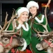 Cheshire Reindeer Hire
