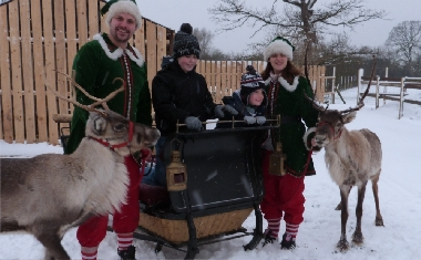 reindeer and traditional sleigh
